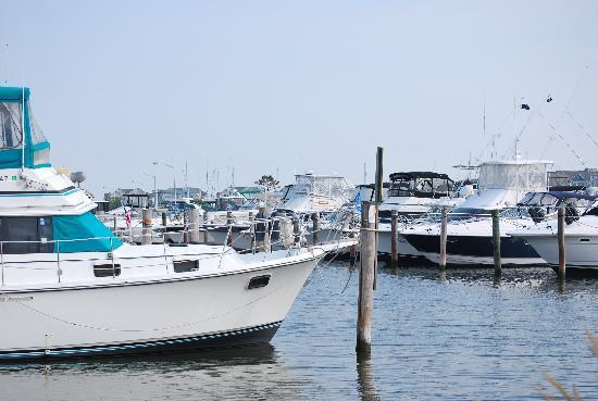 Holiday Inn Express Kent Island: The marina next door