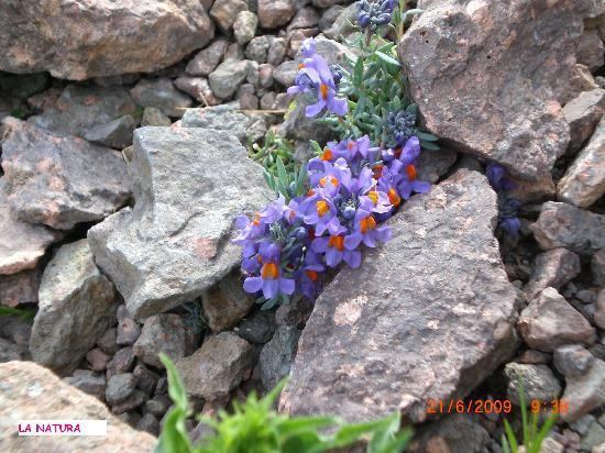 Villaggio le Palme: fiori di montagna