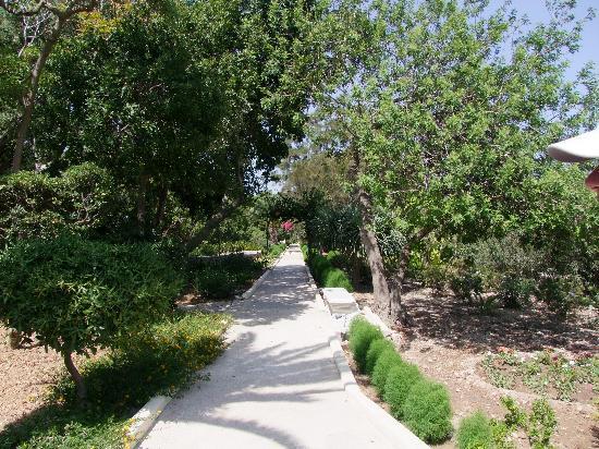 Hotel Phoenicia : Hotel garden