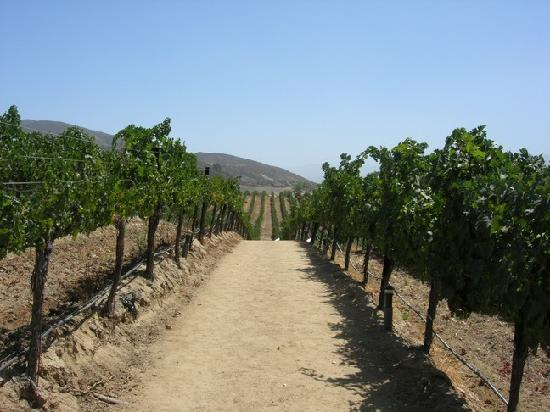 Leoness Cellars: An easy trail among the vines