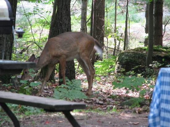 Nobel, Canada: deer visits to sites