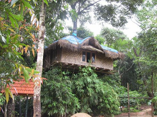 Wayanad Blooms: The tree hut. Beautiful Place.