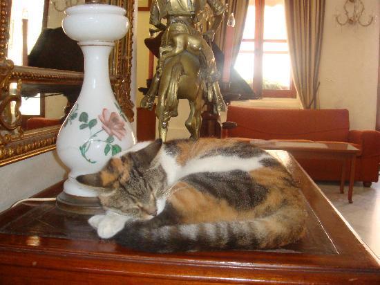 Imperial Hotel : El gato del hotel. Un auténtico amor