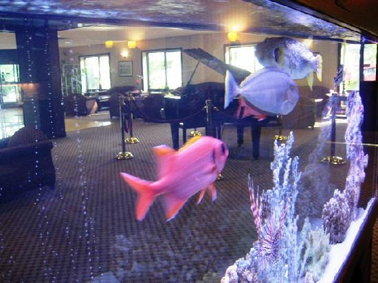 Comfort Inn Syosset by Choice Hotels: Saltwater tank at breakfast