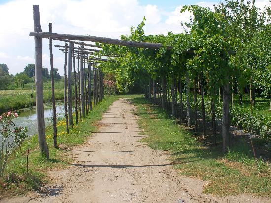 Tiepolo: Vines at restaurant
