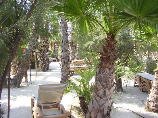 Tiki Hutte : il giardino di fronte casa
