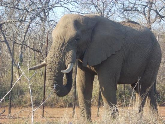 Hlane Royal National Park: Swazilandia