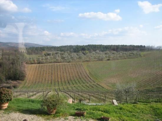Todi, İtalya: grapes grapes everywhere but not a drop to drink!