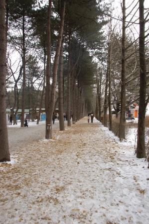 ชุนชอน , เกาหลีใต้: The island has a lot of these tree-lined avenues
