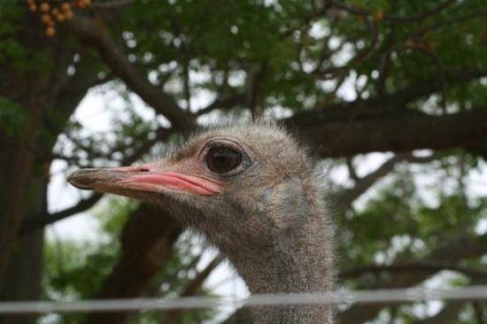Oudtshoorn, África do Sul: Hallo daar