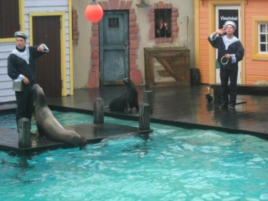 Dolfinarium: Dolphinarium in Harderwijk - seals shows