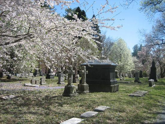 Harrisburg Cemetery : Flowering trees