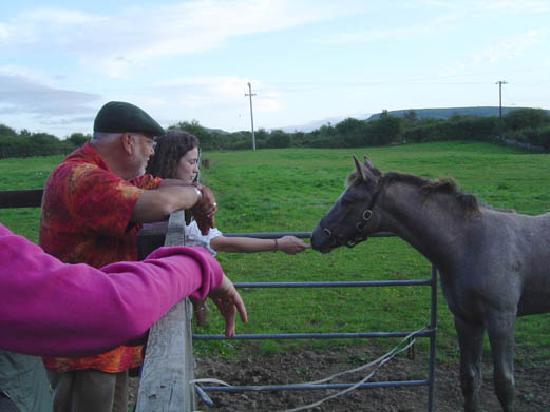 Conneelys Bed & Breakfast : Pferde in der Nachbarschaft