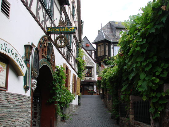 Ruedesheim am Rhein, Germany: Look at the vines and lovely taverns