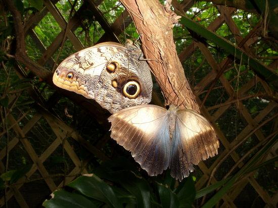 Casa delle Farfalle e Bosco delle Fate di Butterfly Arc: farfalle civetta