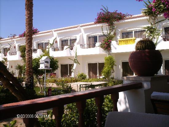 Iberotel Palace: garden view 2