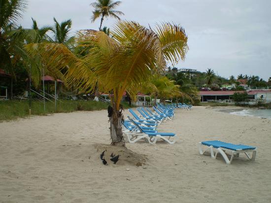 Bluebeard's Beach Club and Villas: The beach all to myself...