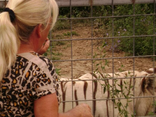 Smithfield, Ιλινόις: White Tigers!