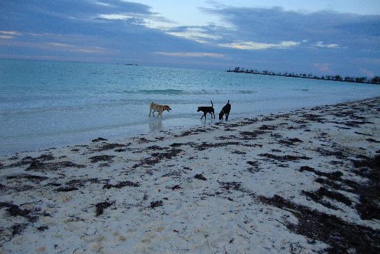 Andros Beach Club: Duke, Riley, and 'Black'