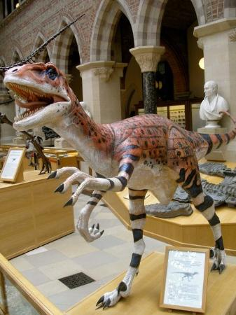 Oxford University Museum of Natural History: National history museum