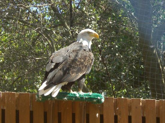 Avalon, CA: Eagle On The Wet Spot Outback Tour!