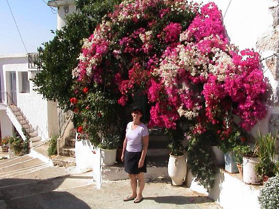 Palmira Apartments : Perdika Village, above Makrigialos