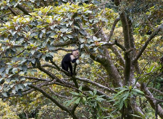TreeTop House: These monkeys paid us a visit during our stay