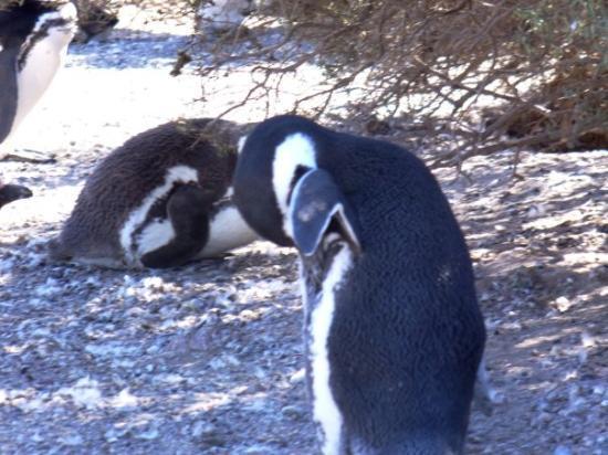 Punta Tombo National Reserve: ...