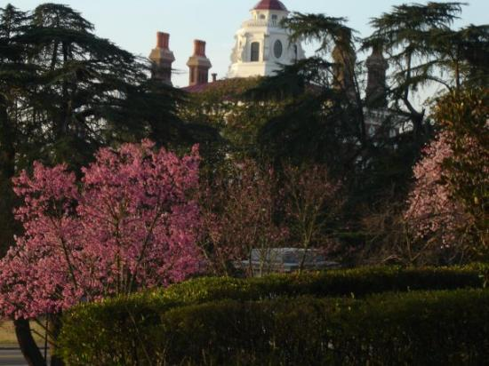 Macon, GA: Hay house and Cherry blossoms
