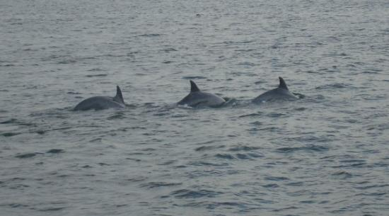 Rudee Flipper Dolphins Not Far From The Beach