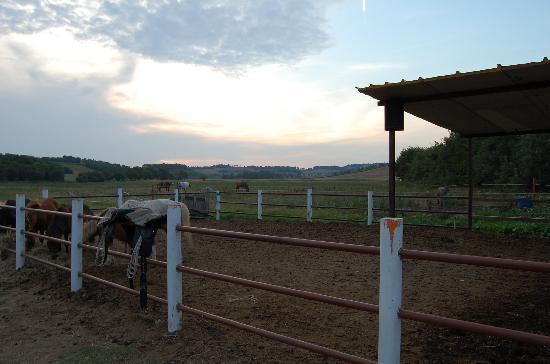 Marcelli di Numana, Italie : Cavalli
