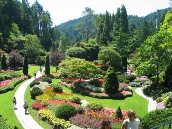 Dahlias Picture Of The Butchart Gardens Central Saanich Tripadvisor