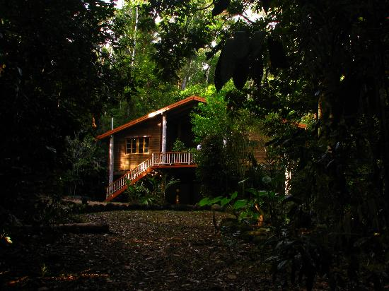 Rivers Edge Rainforest Retreat: Coolara - from the track to the river