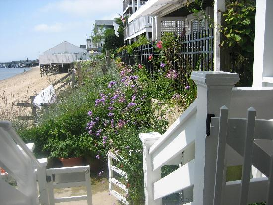 Dyer's Beach House: lovely walkway to the beach
