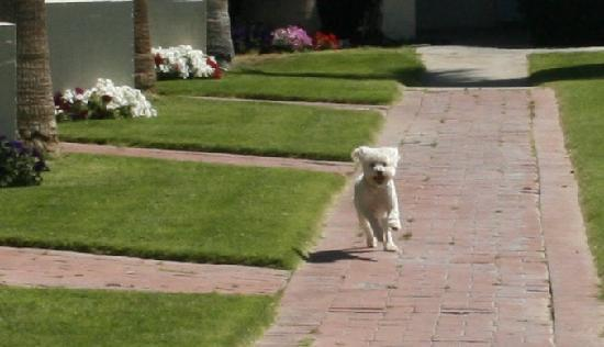 Stanlunds Inn and Suites: Dogs are Welcome