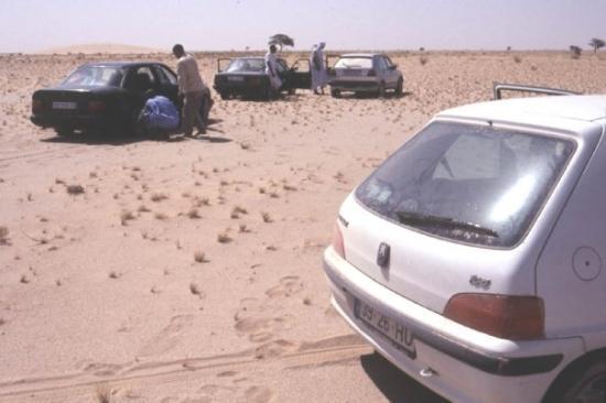 Parc National Du Banc Darguin Photo De Nouakchott Mauritanie