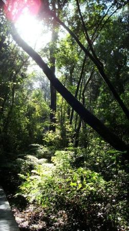 Krysna Picture Of Knysna Western Cape Tripadvisor