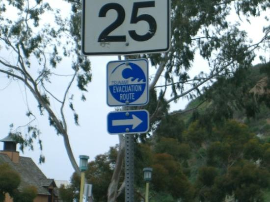 Dana Point, CA: This is something you don't see eveyday....