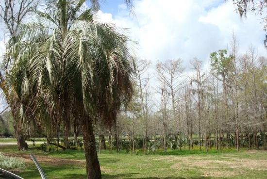 Tress at Jungle Gardens