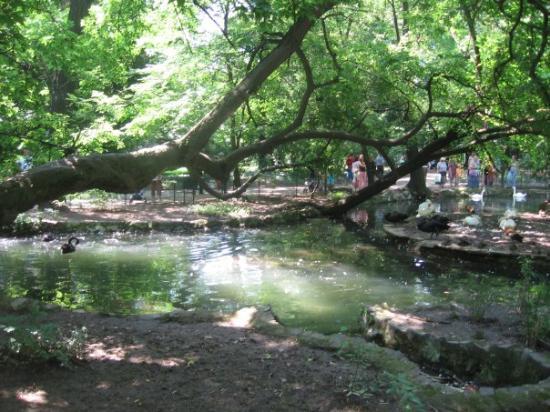 Cismigiu Gardens Photo