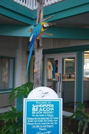 The Sandpiper Beacon Beach Resort: Casey