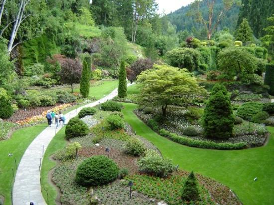 Dahlias Picture Of Butchart Gardens Central Saanich Tripadvisor