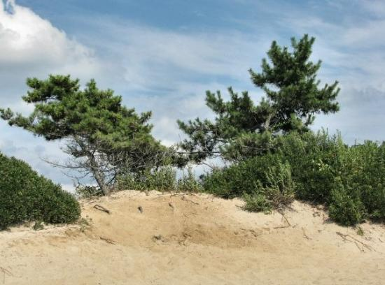 hammonasset beach state park // madison, connecticut