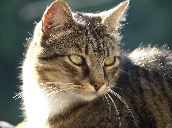 Cinco Bed & Breakfast: Jack - top Cinco cat