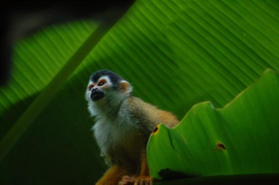 Casa Bambu Resort: Spider monkey at Concorvado National Park