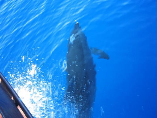 Hotel Martello: Avvistamento delfini ritorno da Lampione