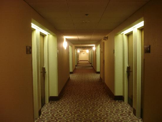 Hampton Inn Champaign/Urbana: hallway