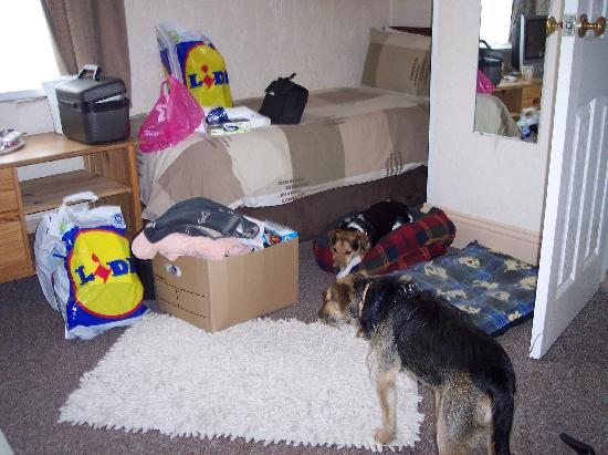 Jasmine Guest House: The pooches settling in