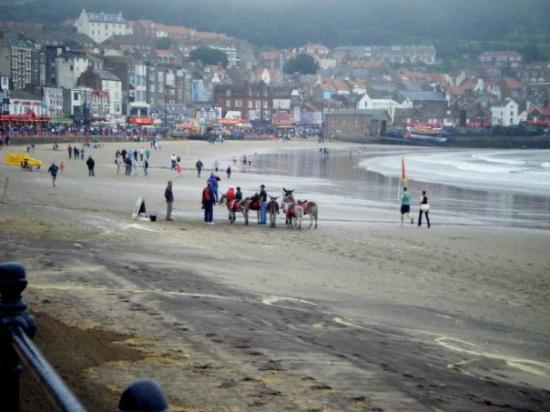 Scarborough, UK: donkeys!!