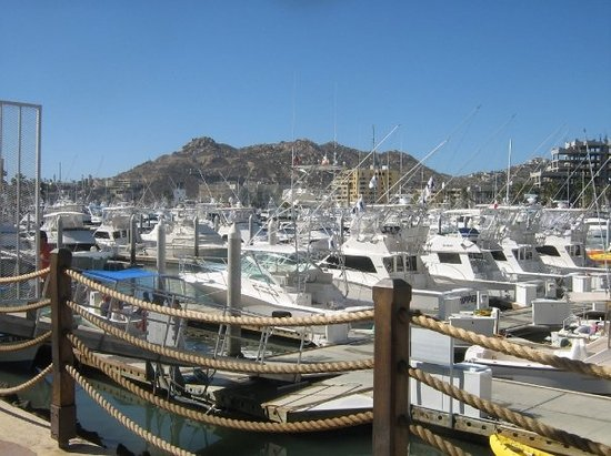 Image result for the marina cabo san lucas pictures